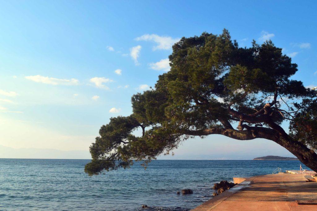 Schiefer Baum in Malinska auf Krk