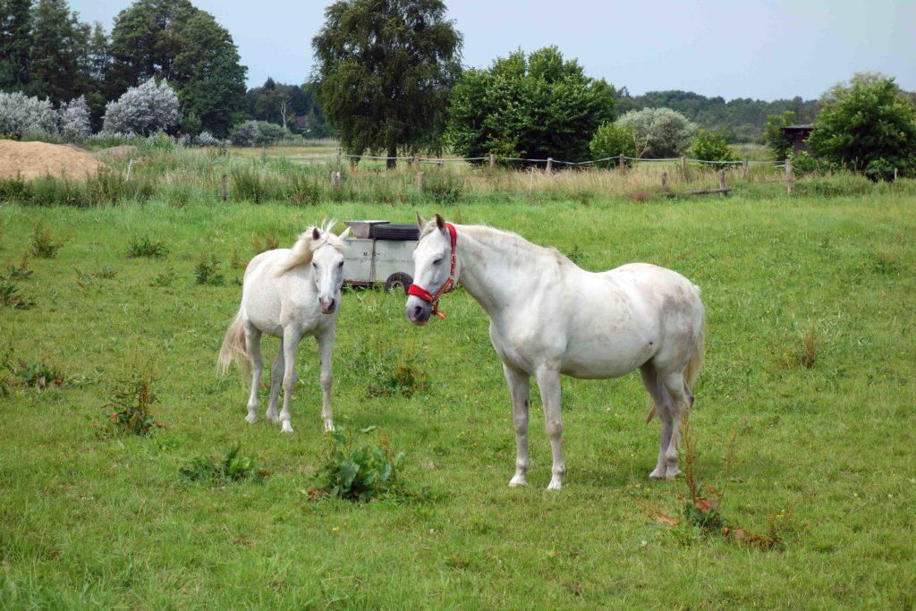 Pferde in Alt-Lübars