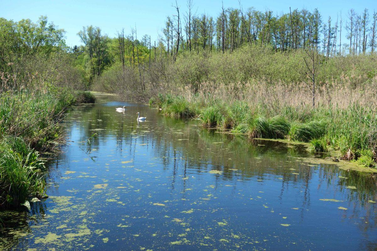 Eine Wanderung auf dem Naturlehrpfad Tegeler Fließ
