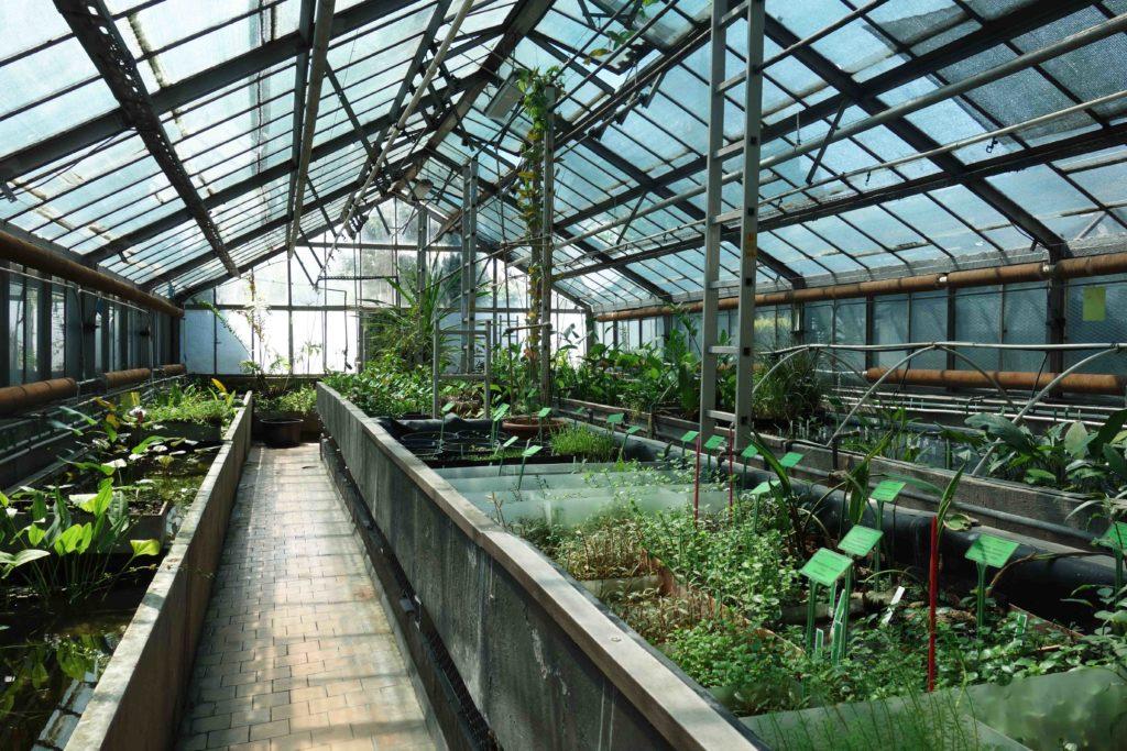 Gewächshaus im botanischen Garten Breslau