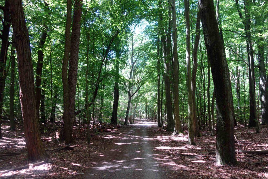 Waldweg im Tegeler Forst