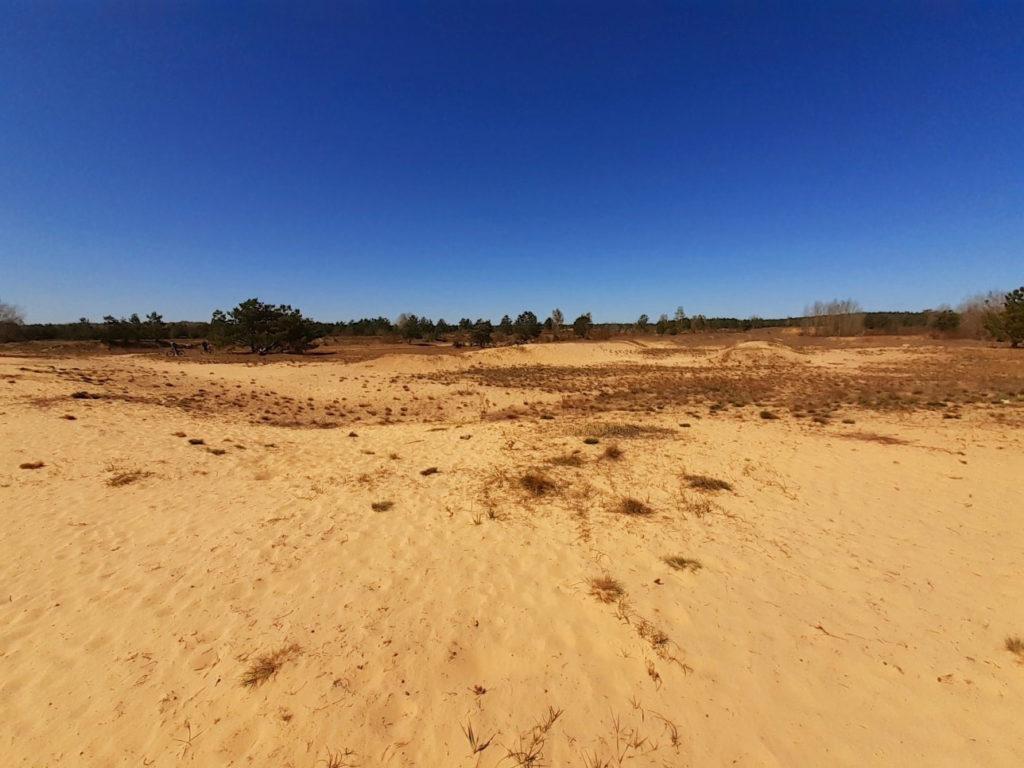 Sanddüne im Naturpark Barnim