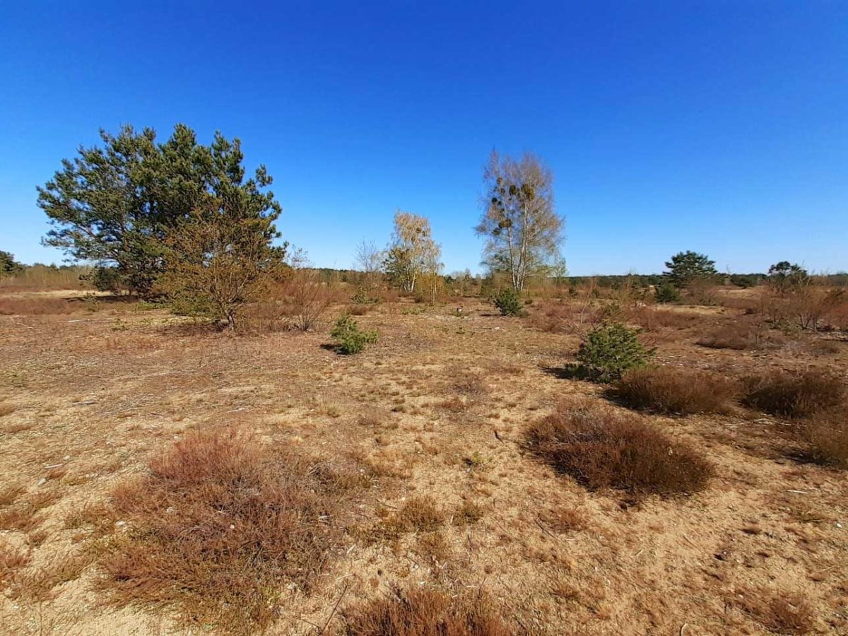 Schönower Heide: Durchatmen im Naturpark Barnim